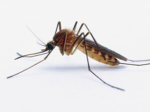 Mosquitoes in Clark County Indiana